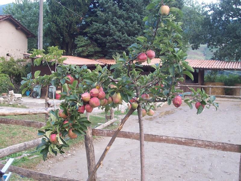 Agriturismo San Martino - La nostra frutta